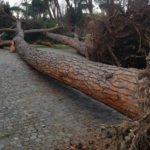 Porto Empedocle, raffiche di vento: albero cade su un'auto