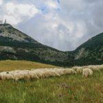 San Giovanni Gemini-Cammarata: torna la Fiera della Montagna