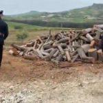 Rubano legna dai boschi della Regione a Naro: scattano due arresti