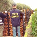 Coronavirus: controlli alimentari, in Sicilia multe per cinquantamila euro