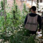 """Una greenhouse """"stupefacente"""" fra i tetti di Favara: in manette presunto spacciatore"""