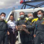 Lampedusa, tartaruga ferita salvata da una motovedetta della Guardia di Finanza