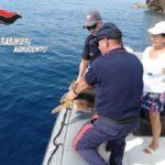 Tartaruga caretta caretta soccorsa dalla motovedetta dei Carabinieri e portata in salvo al centro di recupero