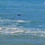 """""""Macchie di schiuma marrone"""" nel mare di San Leone: l'allarme di Mareamico – VIDEO"""