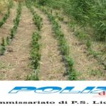 """Campobello di Licata, agricoltore arrestato per coltivazione di sostanza stupefacente ai fini di spaccio: sequestrati 86 chili di """"Cannabis"""""""