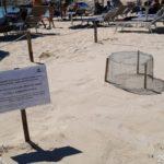 Lampedusa: seconda nidificazione di Caretta caretta sulla spiaggia della Guitgia