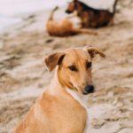 Ribera, avvelenamento cani randagi: l'Amministrazione comunale condanna i gravi fatti