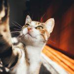 Agrigento, aggredita da un gatto: donna finisce in Ospedale
