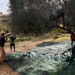Ultimi giorni per l'adesione delle associazioni alla campagna di raccolta dei frutti e delle olive del Giardino Botanico di Agrigento