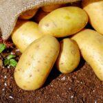 """""""Il pranzo della domenica""""-antipasti- golose rose di patate e pancetta"""