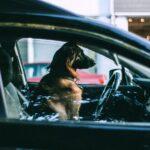 Licata, lascia il cane dentro l'abitacolo della propria auto: denunciato 50enne