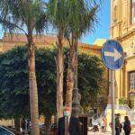 Agrigento, tre nuove palme a Piazza Pirandello