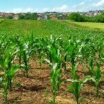 """Agricoltura, sostegno a terreni danneggiati, Scilla: """"graduatoria, ammesse 377 domande"""""""