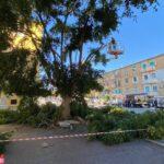Agrigento, potati alberi al Villaggio Peruzzo