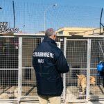 I Carabinieri del NAS sequestrano il canile di Canicattì