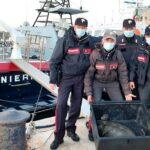 Linosa, Tartaruga in difficolta messa in salvo dai Carabinieri