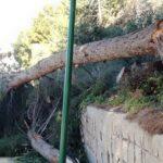Fontanelle, rimossi pini pericolanti: ripristinata la sicurezza