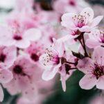 Canicattì, emergenza Covid: sospeso il mercato dei fiori