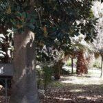 Licata, riprende vandali intenti a danneggiare una villa Comunale: ex assessore ferito