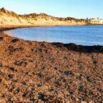 """Mareamico Agrigento: """"l'importanza della Posidonia Oceanica"""" – VIDEO"""