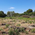 Montevago, presto fruibile la zona archeologica della Villa Romana: lavori in corso