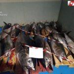 Sciacca, sequestrati 750 chilogrammi di tonno rosso: scattano anche le sanzioni