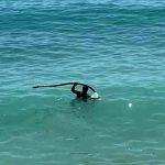 """San Leone, ferri sul fondo del mare. Mareamico si appella a volontari: """"abbiamo bisogno del vostro aiuto"""""""