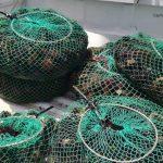 Pesca di frodo dei ricci di mare: sanzionati pescatori a San Leone