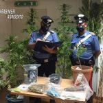 Cammarata, coltivava piante di Cannabis: arrestato 27enne