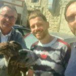 Palma di Montechiaro, Poiana ferita: tratta in salvo grazie all'intervento del Sindaco Castellino